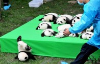 Komik Pandalar ile Amaçsız Yaşadıklarına Dair Anlar