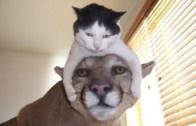 Sevimli Halleriyle Güldüren Komik Yavru Hayvanlar