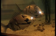 Şaşkına Çeviren Robot Balıklar Tüm İlginin Merkezinde!