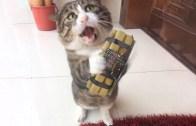 Komiklikleriyle Gülmekten Kırıp Geçiren Yaramaz Kediler
