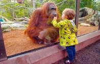 Hayvanat Bahçesinden Nasibini Alan Sevimli Çocuklar
