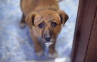 İçinizi Sızlatacak Umut Dolu Terkedilmiş Yavru Köpek