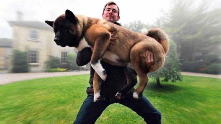 Tatlı Köpekler ve İnsanlardaki Nefret Ettikleri Her Şey