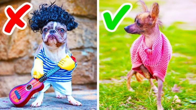 Evcil Köpek Bakanlar İçin Mükemmel Mutluluk İpuçları