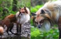 Doğada Nadir Bulunan Efsanevi Hayvanlar Karşınızda