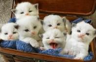Yavru Kedilerin Sevimli Halleri ile Gülmeye Hazır Olun!