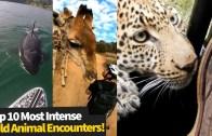 Sıra Dışı Vahşi Hayvanlar İnsanlara Duygusal Yaklaşıyor