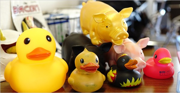 New duckies! And... pigs?
