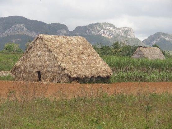 Cuba- Vinales: Première region productrice de tabac. La maison en photo est le lieu ou le tabac est seché pendant de très longue semaine. Photo blog voyage tour du monde https://yoytourdumonde.fr