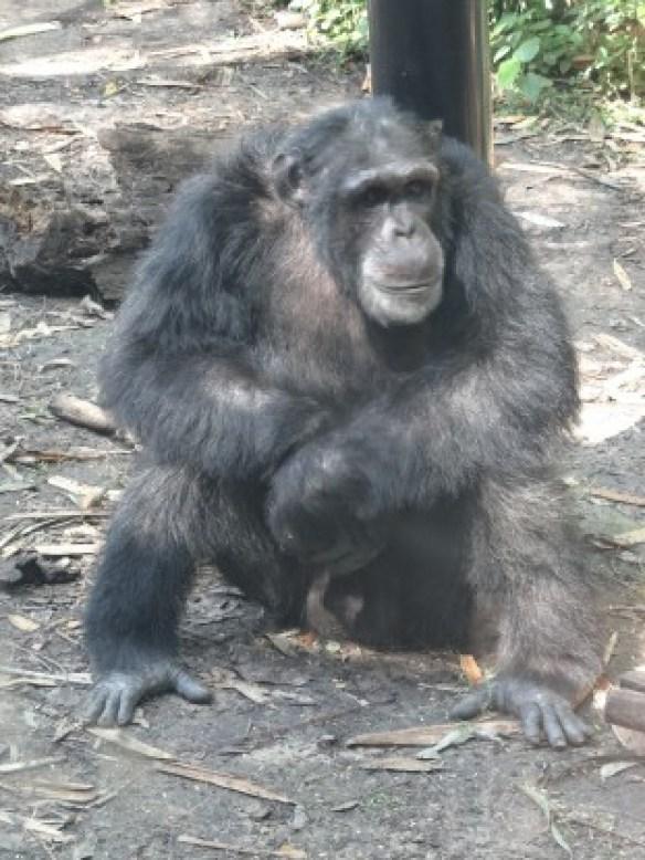Australie- Rockampton: Jardin Botanique et animaux.