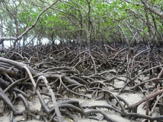 Australie- Cap Tribulation: La marée est basse l'occasion unique de voir ce qui s'y passe sans penser aux crocodiles!!!