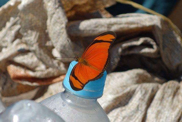 Pérou-Réserve Pacaya Samiria: Les papillons sont tres presents.