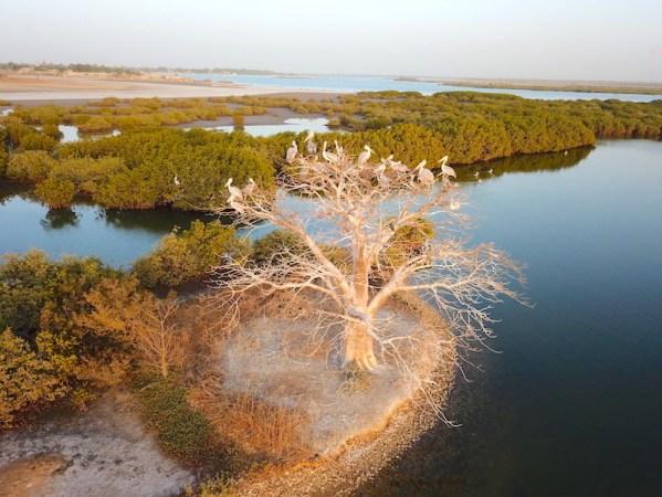 L'Ile aux oiseaux sur l'Ile de Mar Lodj dans le Sine-Saloum photo blog tour du monde bolong https://yoytourdumonde.fr