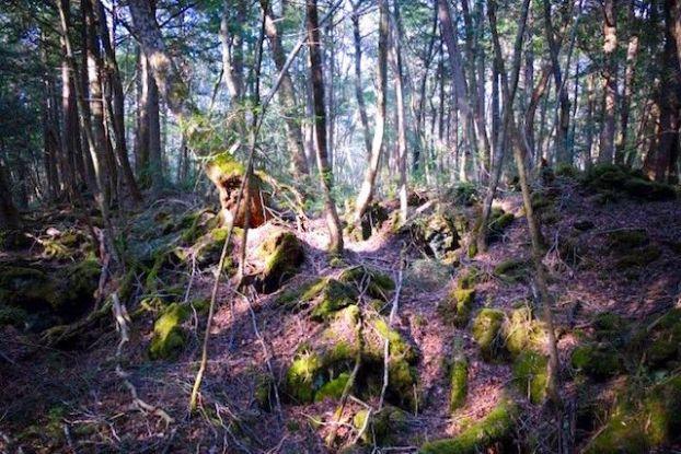 La foret hantée de Aokigahara ou de nombreux japonais viennent pour se...suicider! Photo blog voyage tour du monde https://yoytourdumonde.fr