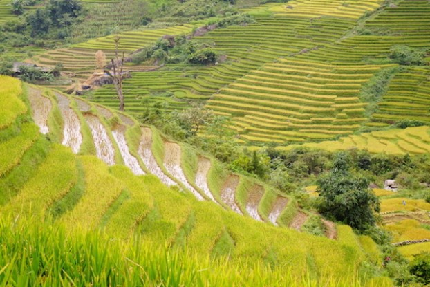 Vietnam Sapa terrasses rizières tour du monde photo blog https://yoytourdumonde.fr