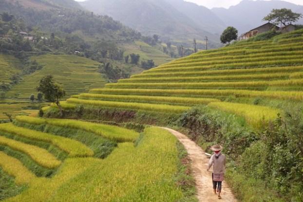 Vietnam sapa rizieres terrasse blog photo tour du monde https://yoytourdumonde.fr
