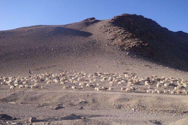 Un jeep fait le voyage à partir de juin entre Manali et Ley pour rejoindre la capitale du Ladakh, photo blog voyage tour du monde https://yoytourdumonde.fr