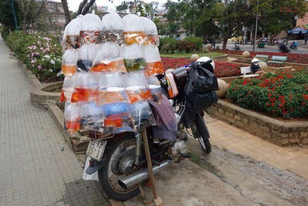 Vietnam - Dalat: Qui veut un poisson rouge! Jamais de la vente ambulante n'avait vue avoir un si vrai nom!