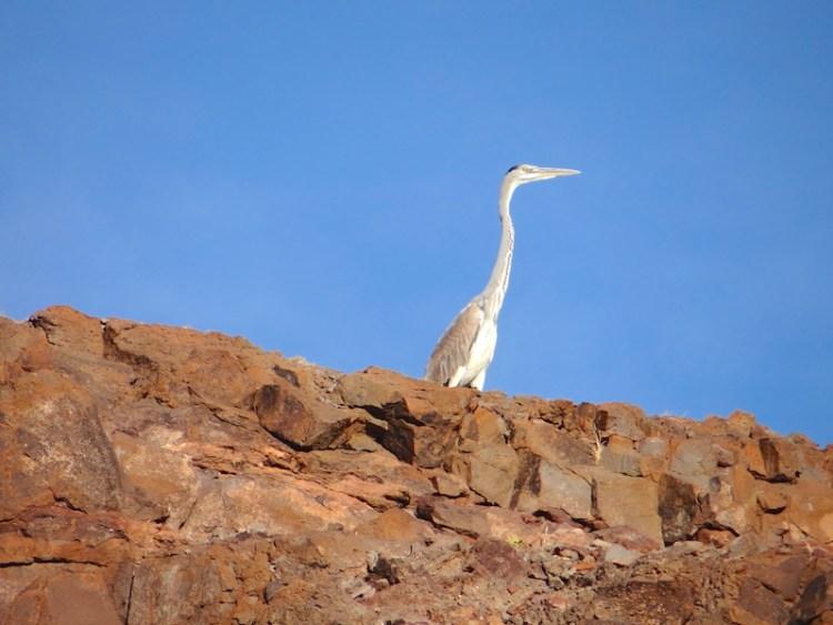 Un oiseau dans la réserve d'Hardap en Namibie photo blog voyage tour du monde https://yoytourdumonde.fr