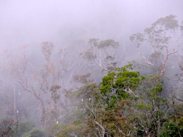 Trek et randonnée du coté des Blue Mountains en Australie photo blog voyage tour du monde https://yoytourdumonde.fr