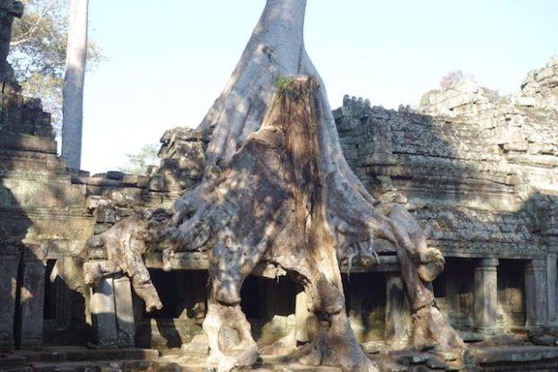 Les celebres racines des arbres qui changent la forme des temples du coté des temples d'Angkor ici photo blog Preah Khan https://yoytourdumonde.fr