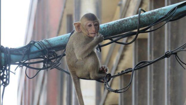 Lopburi-thailande-invasion-singe-travelling-voyage