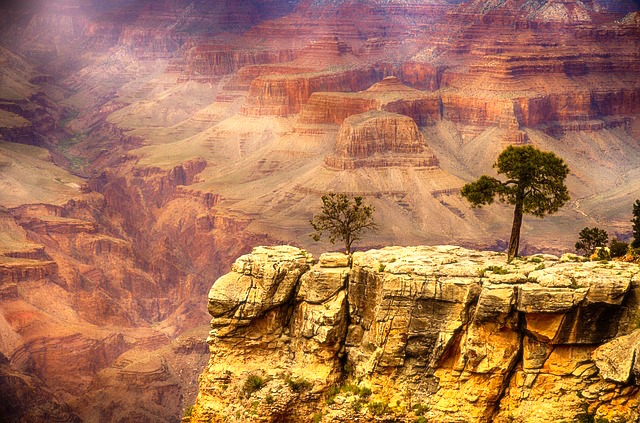 Entre arbres et roche sur le Grand Canyon. Photo tour du monde voyage https://yoytourdumonde.fr