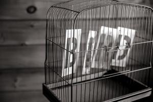 Photo-BIRDCAGE