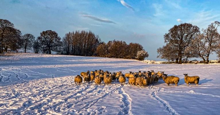 RIPO22149_Stuart Ward_Snow in the Dales_800px