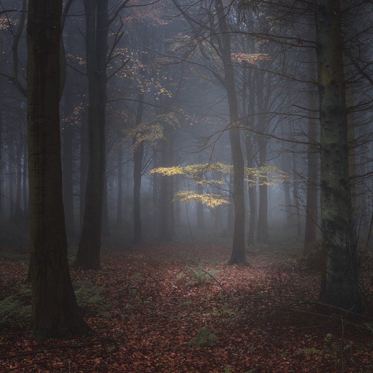 RIPO24206_Les Forrester_The Last of Autumn_800px