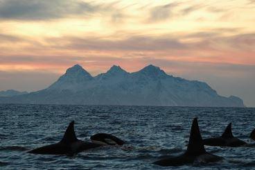 isla-lofoten-lugares-increbles-escondidos-en-nuestro-planeta-para-viajar