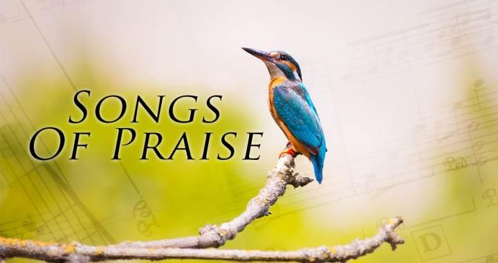 songsofpraisebird