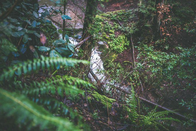 dawn falls trail larkspur, dawn falls larkspur, dog friendly trail in larkspur, dog friendly hiking dawn falls trail dogs allowed on dawn falls trail, marin hiking,
