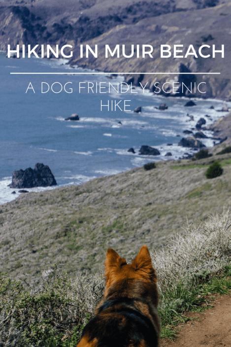 Dogs hiking Muir beach lookout Bay area GGNRA California Marin