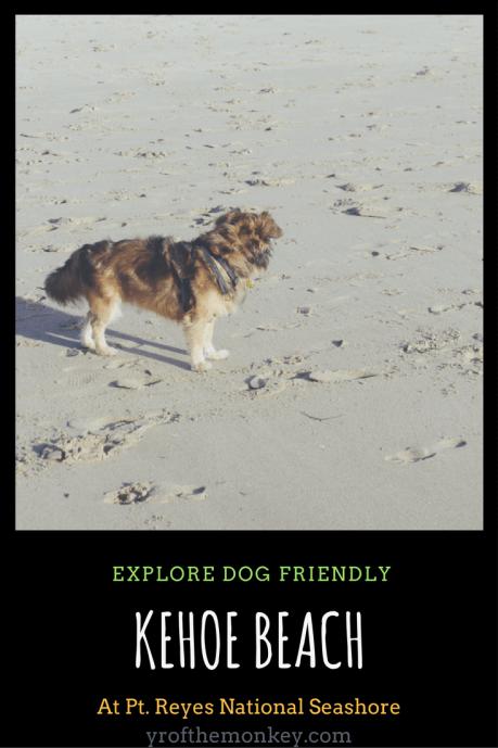 Kehoe beach pt reyes National seashore california dogs