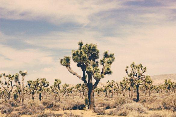 Joshua tree national park Palm springs Cholla cactus travel California photography nature geology
