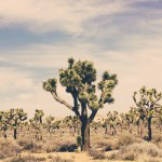 Joshua tree national park Palm springs Cholla cactus travel California photography nature geology