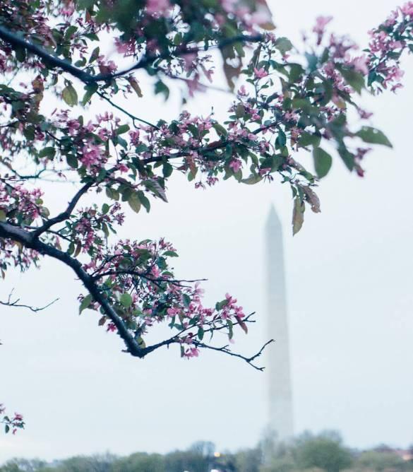 Washington DC Lincoln memorial USA capital spring cherry blossom festival travel photography culture history politics white house Barack Obama President