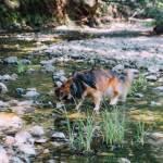 Nature Marin Cataract Falls Bay area waterfalls dogs pets hiking dogfriendly California Mount Tamalpais