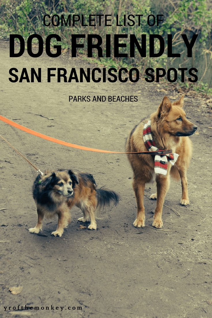 This is a complete guide to dog friendly spots in San Francisco, California, USA by a resident dog mom listing some of the best San Francisco dog parks with stunning views to be enjoyed by human and canine alike! Pin this to your pet friendly travel or San Francisco or California travel board now! #dogfriendlytravel #petfriendlytravel #travelwithdogs #dogs #sanfrancisco #USA #California #dogparks #SFdogparks