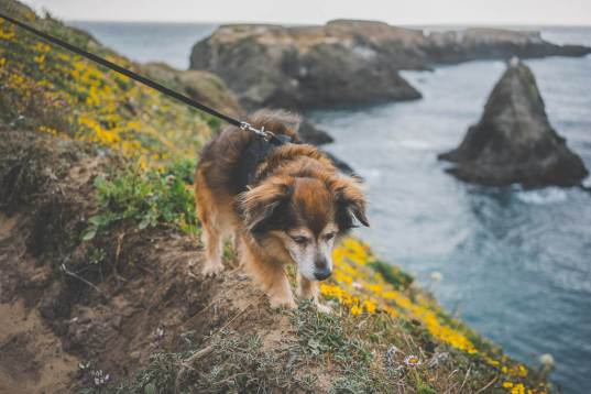 dog friendly Mendocino is a complete guide on all dog friendly activities in Mendocino county, pet friendly Mendocino