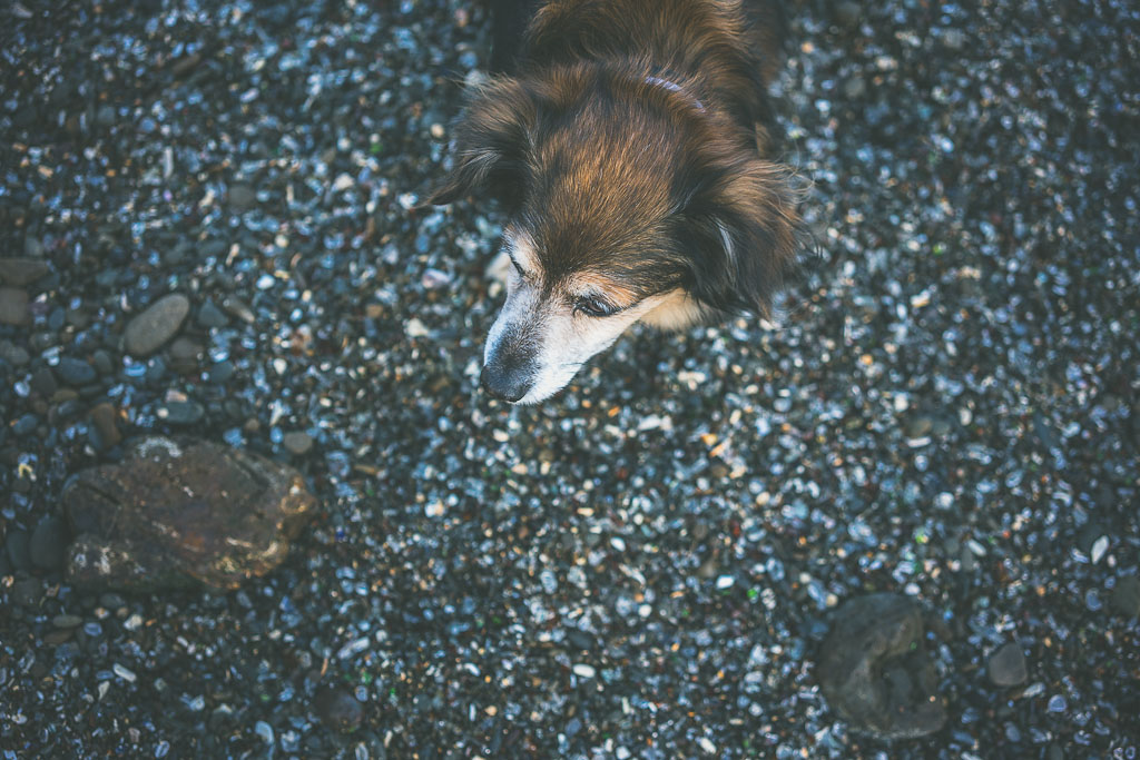 Dog friendly beaches in California, beaches that allow dogs in California, pet friendly beaches in California, dog beaches in California
