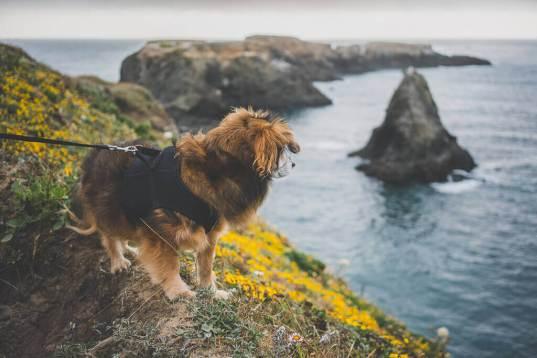 dog friendly hiking in Mendocino, dog friendly activities in Mendocino