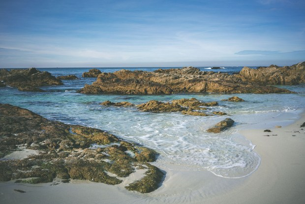 dog friendly carmel, dog friendly guide to carmel, 17 mile drive, dog friendly attractions carmel