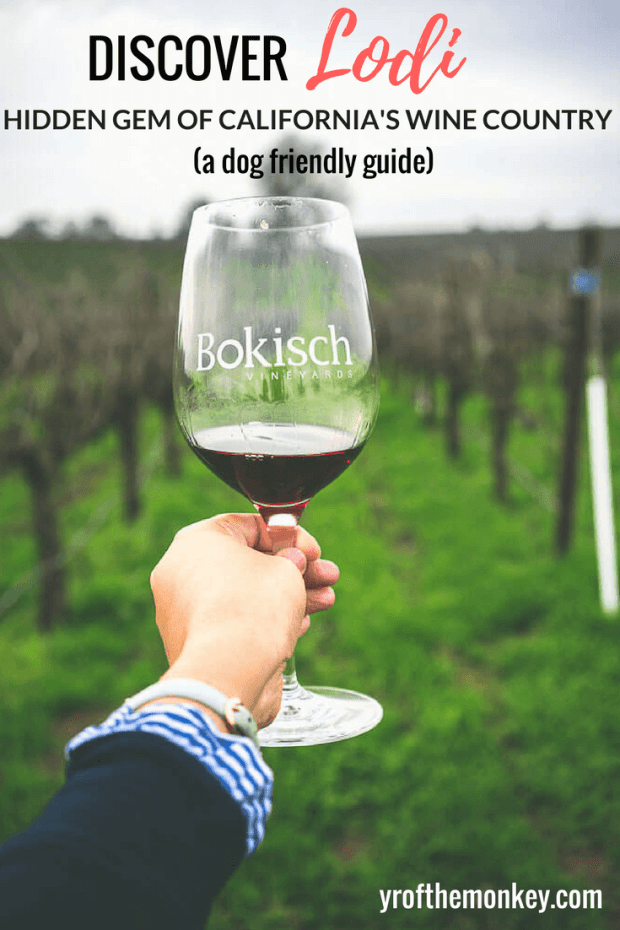 This is a dog friendly guide to Lodi, California which is the best kept secret in Ca's wine country. Showcasing the best Lodi Wineries for some amazing (and super economical) wine tasting as well as other attractions, Lodi is the perfect alternative to touristy Napa and Sonoma. Pin this to your California or pet friendly travel board now! #lodi #winetasting #californiawinecountry #california #travelwithdogs