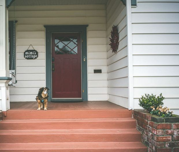 dog friendly hotels, where to stay with your dog
