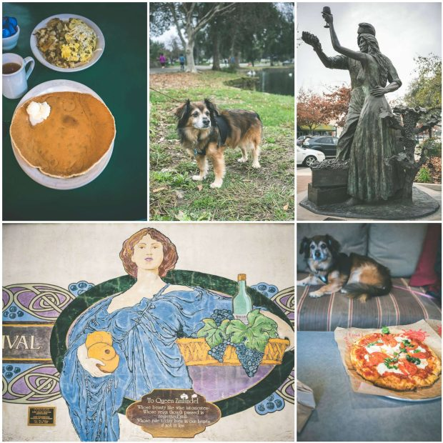Best lodi wineries dog friendly wine tasting lodi California
