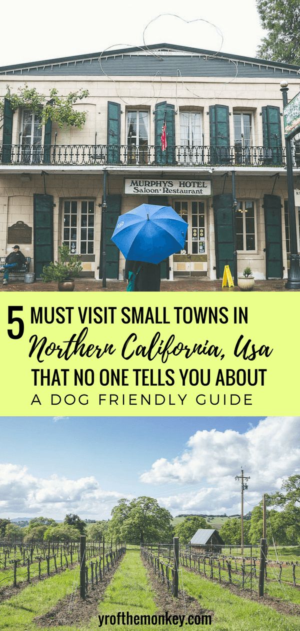 Looking for dog friendly weekend getaways in Northern California, USA? Read this local's guide to 5 small towns (California's hidden gems) around the San Francisco Bay Area which are incredibly beautiful with rolling vineyards (minus the crowds), great hikes, lots of good restaurants and even an old faithful Geyser! Pin this post to your USA or California board now! #californiatravel #USA #SanFranciscobayarea #weekendgetaways #dogfriendly #petfriendly