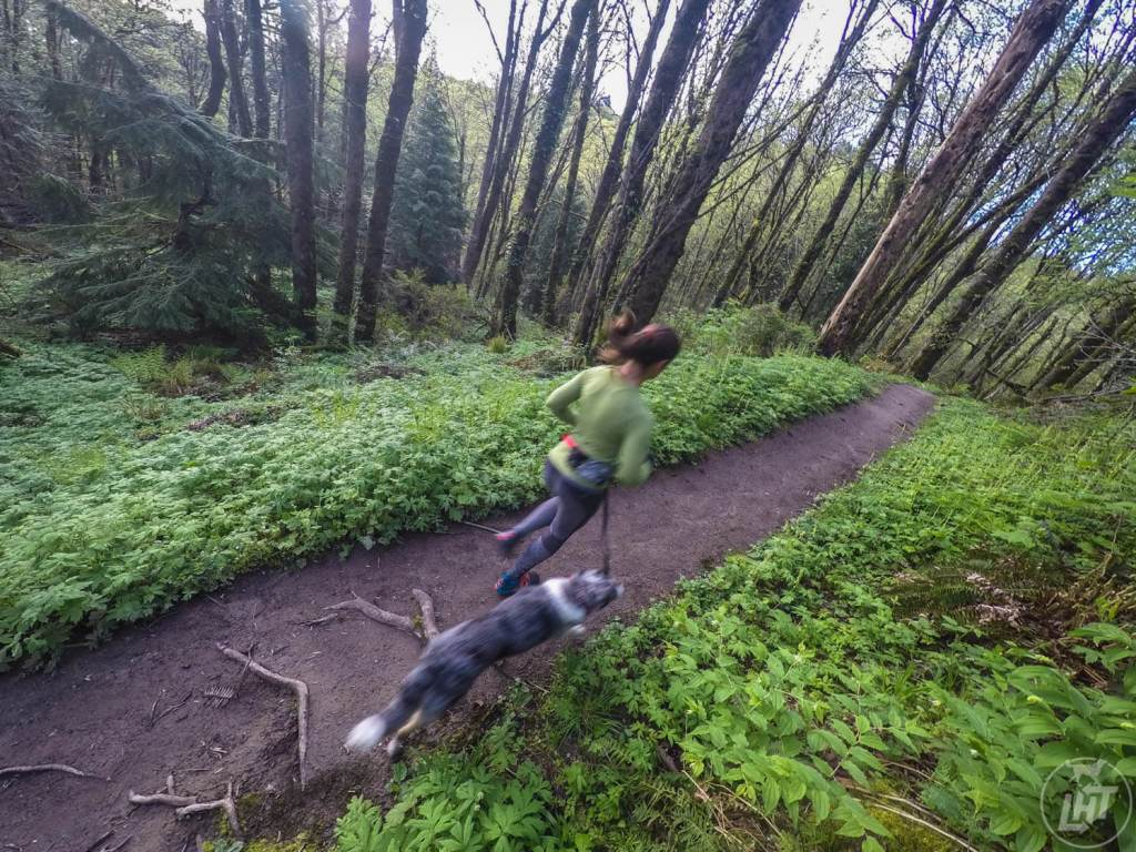 Most dog friendly cities in US, American cities that are dog friendly, Portland Oregon, hiking with dogs in Portland
