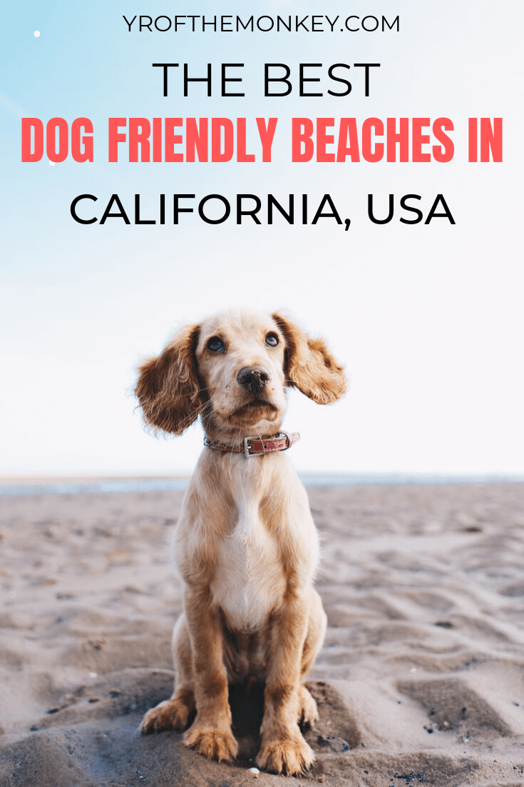 Looking for the best dog friendly beaches in California? Then read this San Francisco dog mom's guide on the top beaches in the state that welcome dogs with important info on beachfront hotels and leash laws. Pin this to your pet friendly travel or USA travel board now! #dogfriendly #petfriendly #beach #beachesofcalifornia #USA #California #travelwithdogs #dogbeach #dogfriendlybeaches #beachvacation